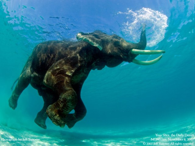 encore-elephant-baigne